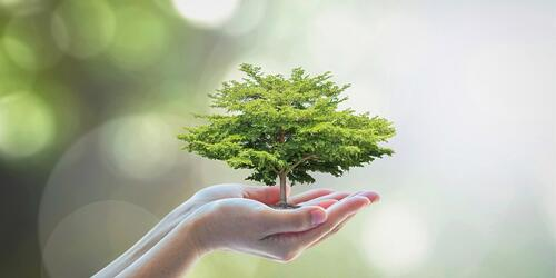 growing-tree-to-save-ecological-sustainability-sustainable-and-picture-id956676682